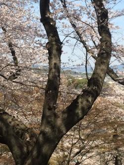 Vue sur Horyuji depuis Mimuro-yama